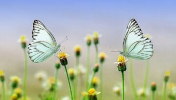 Angel Signs: The Beautiful Secrets of the Butterflies