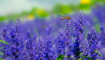Angel Sign: The Spiritual Meaning of Dragonfly